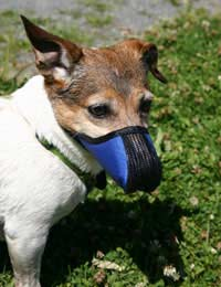 Muzzle Canine Breeder Dangerous Dog