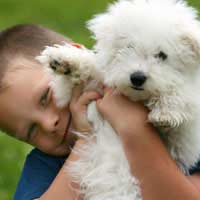 Children Dogs Suitable Dogs Family Dogs